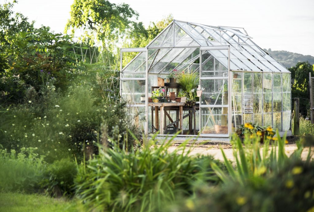 Greenhouse in garden filled with plants